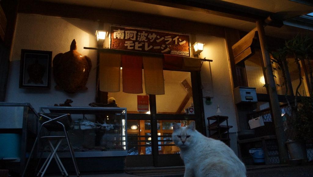 管理棟入口で出迎えてくれる看板ネコちゃん