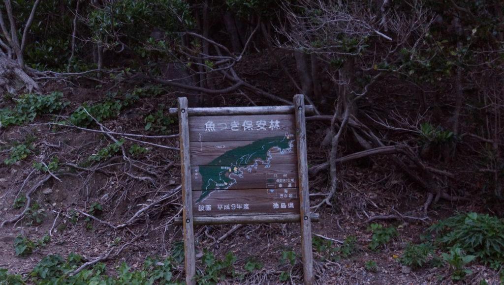 美波町~牟岐町にかかる海沿いにある林は魚つき保安林に指定されている